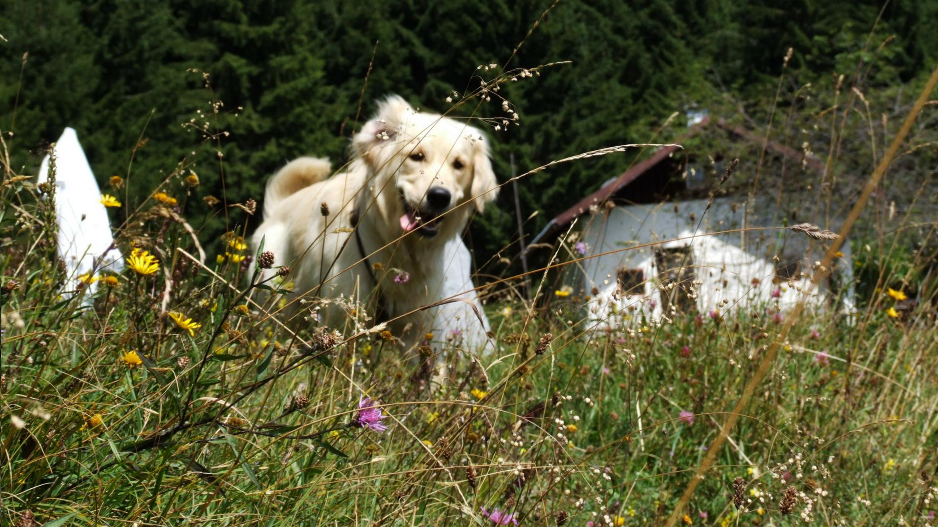 Die Beste Gesundheit für dein Tier / Hund, Katze, Pferd