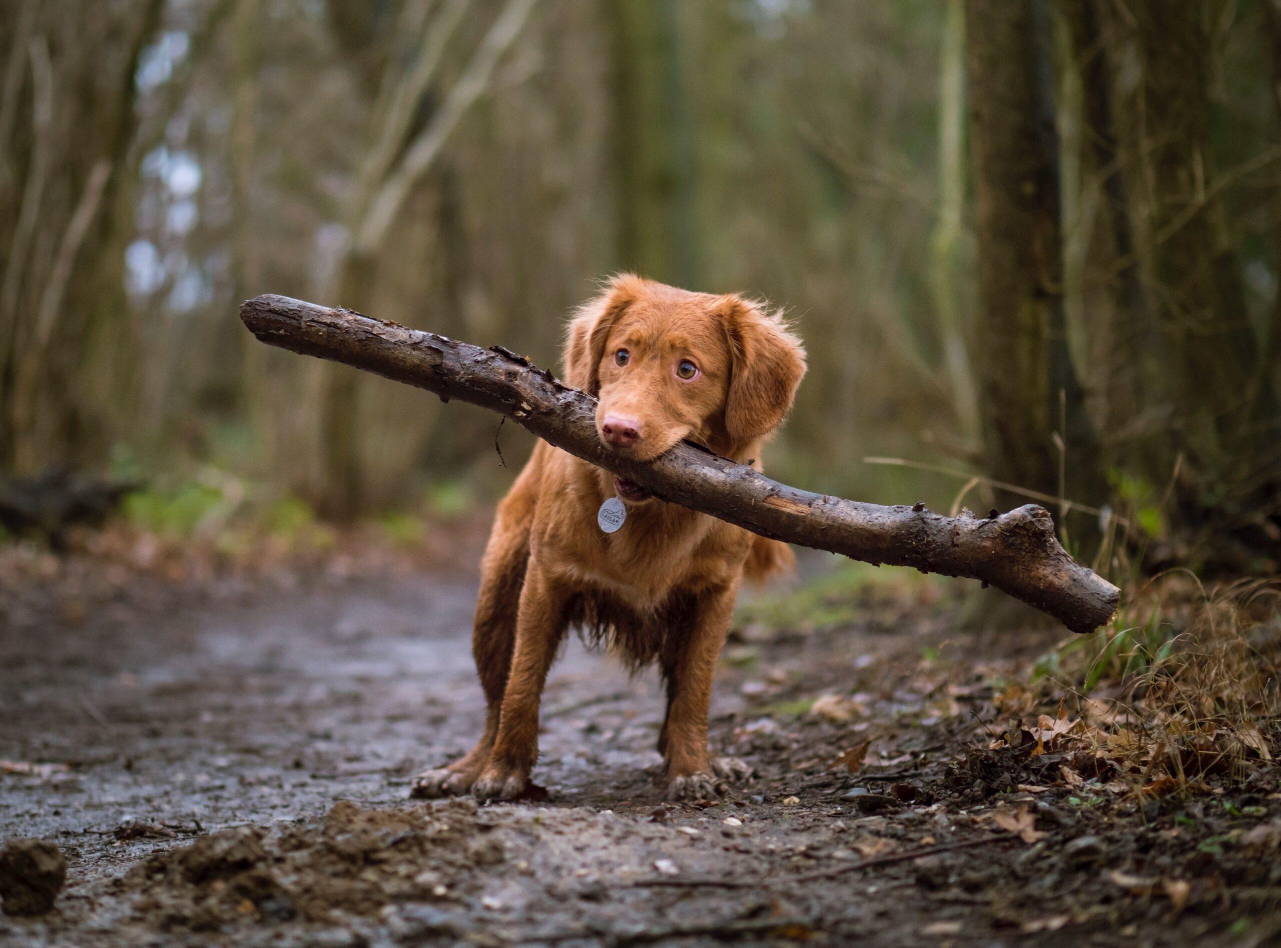 Du und dein Tier - Alles rund um dein Tier - Wir unterstützen dich!